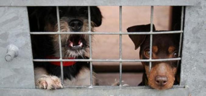 Meštani Bistrice protiv izgradnje azila za pse