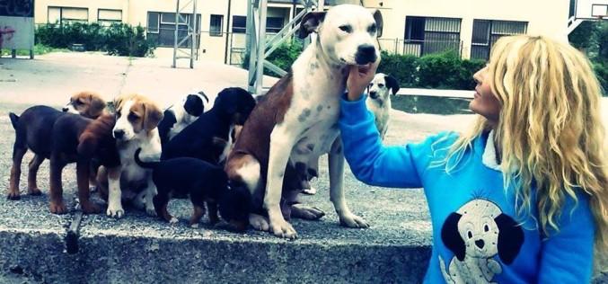 Novo masovno trovanje uličnih pasa